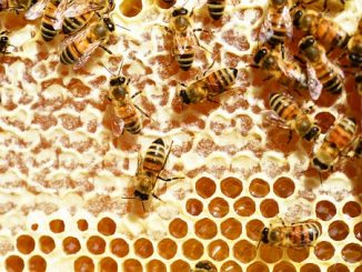 органичен мед